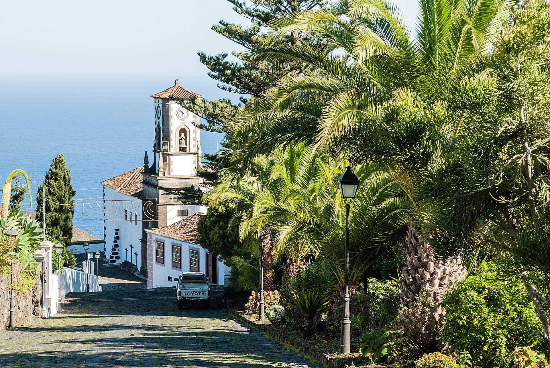 Palmen auf La Palma
